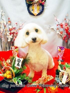 中嶋ボーイくん2015.12新